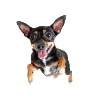 Is Your Dog Overly Excited About Guests? - Dog Obedience ...